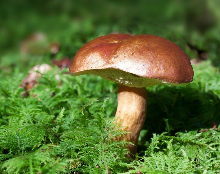 houby Trendista.cz